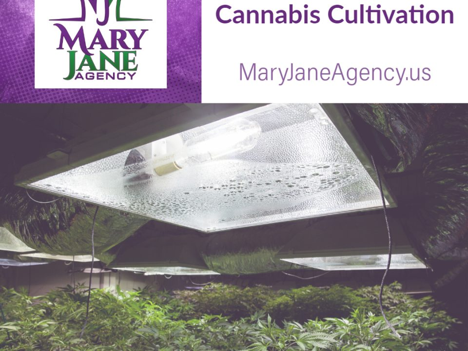 Introduction to Cannabis Cultivation